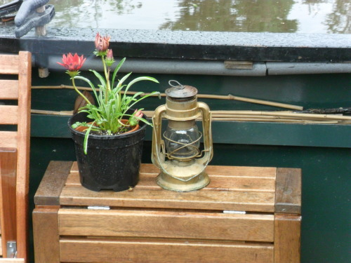 Oil lamp and flowers on a Canal barge, nr Gailey Locks. The Staffordshire and Worcester Canal.