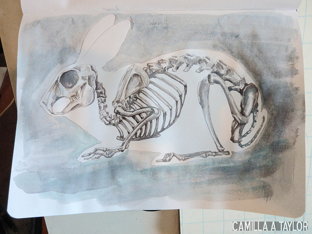 Reblogging myself for Easter.  Because bunnies. camillataylor: bunny skeleton done in watercolor