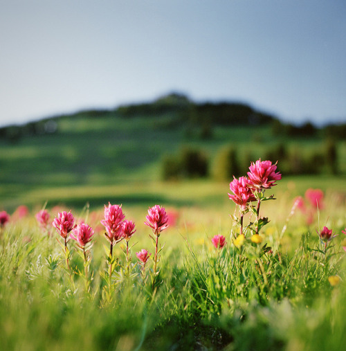 a sprinkle of summer by manyfires on Flickr.