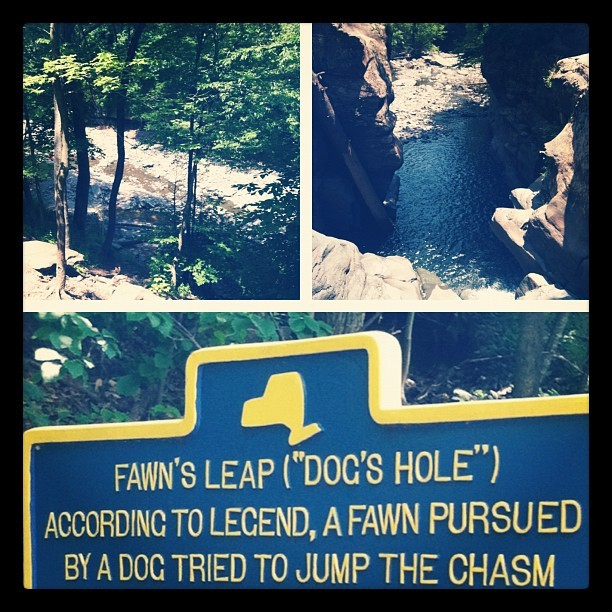 tstrick92:  Fawns Leap 2012 (Taken with Instagram)