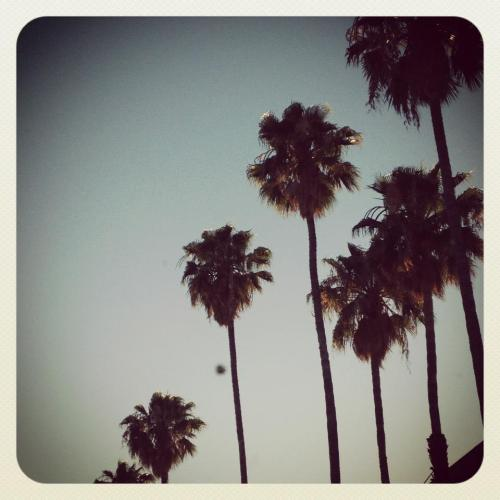 Serious obsession with palm trees.