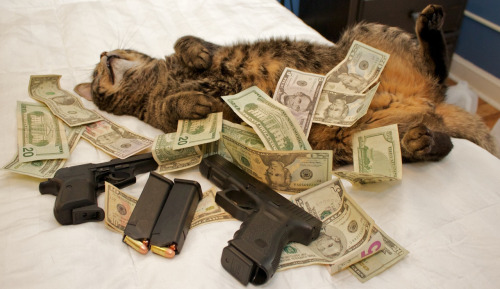 Cash gats and cats, because fuck you