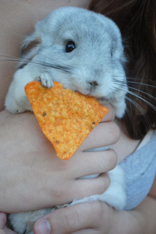 w0nderhill:  IT HAS A DORITO. I AM SO DONE.