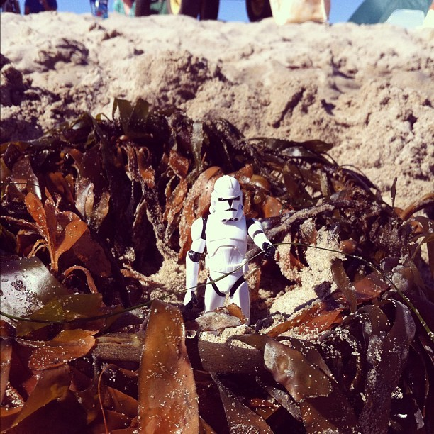 #georgethetrooper inspecting the seaweed  (Taken with Instagram)