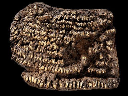 "World's oldest purse found—studded with a hundred dog teeth?  ""It seems to have been very fashionable at the time.""  (click-through for full story)"