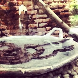 I'm taking bath~ #awesome #indonesia #safarimarinepark #ipadnesia #instapad #bali #vocation #snake #natural  (Taken with Instagram at Bali Safari and Marine Park)