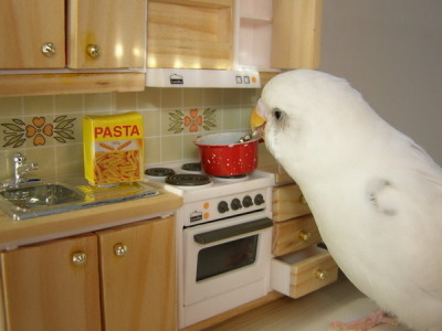 "cooking is for the birds…, afunny photo of parrot ""cooking pasta."" Where did this photograph originate pre-tumblr (photographer, pet owner)?"