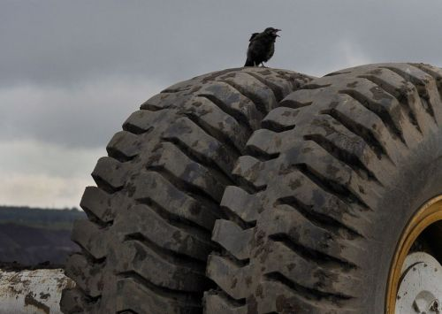 A Raven on a 60,000 dollar Tar Sands Tire (and they say the ravens are a problem because they go through the human garbage — it seems to me that they need to work on their definition of terms)