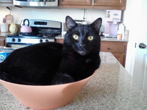 getoutoftherecat:  get out of there cat. you are not salad with garbanzo beans. we asked for spicy olive oil, not sassy cat!  i asked for sassy cat :(