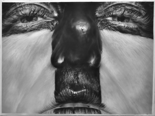 "ssdmmfr:  Artist: Melissa Cooke ""Blocked"" Graphite on Paper, 50"" x 67"" Part of the ""Surfaced"" Series  SURFACED""Surfaced"" acknowledges the relationship between photography, painting and drawing in portraiture.  I take photographs as I paint and pour liquids onto myself, using my face as a canvas.  The photo shoot references the practice of drawing and painting; then the final graphite drawing references photography.  The boundaries between the mediums are broken down and the processes are interwoven. "" The images depart from the framing of traditional portraiture.  The viewer is not given an entire bust of the subject, rather the frame zooms into up-close sections of the face.  The cropping pushes the face to the surface of the paper, making the figure more ambiguous.  Flesh becomes abstracted: obliterated by paint on the skin,  distorted by the eye of the camera lens, or smeared by the glass of a Xerox machine."" ""Photographs are used as inspiration for drawing and mark making.  The drawings are made by dusting thin layers of graphite onto paper with a dry brush.  The softness of the graphite provides a smooth surface that can be augmented by erasing in details.  Gestural marks are apparent, while still creating dimension.  Textures are given precedence over portraying a likeness to the figure.   The act of drawing becomes the focus."""