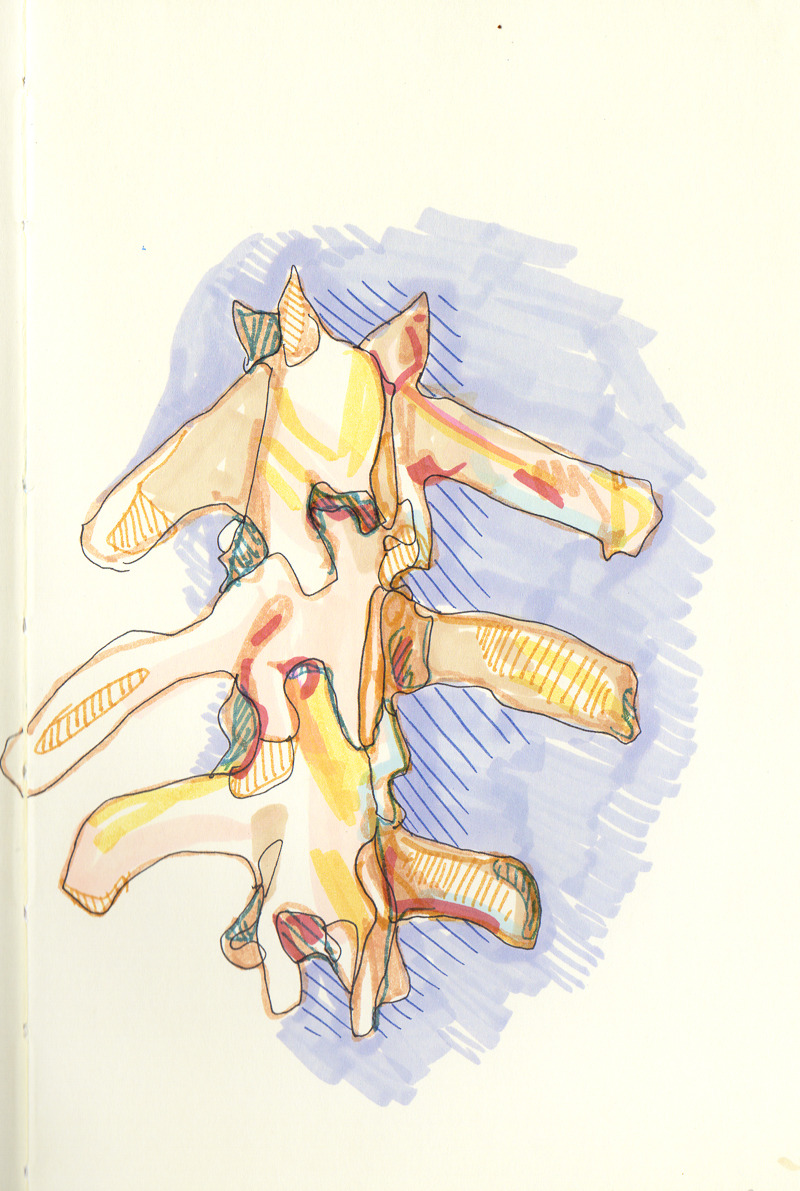 More Spine from Moleskine. Mixed Media, 2012