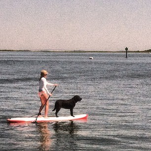 #SUP   #blacklab
