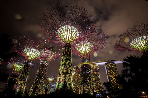 "mothernaturenetwork:  Photo of the day: 'Supertrees' illuminate Singapore skyA technicolor grove of ""Supertrees"" is illuminated on July 2 during a light and sound show at Gardens by the Bay in Singapore. The 150-foot-tall Supertrees are constructed from concrete and steel and feature a vertical garden consisting of 163,000 plants from more than 200 species of flowers. The massive artificial trees are part of the ambitious park project, which opened free to the public on June 29."