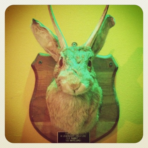 Jackalope (Taken with Instagram at Museum Of The Weird)