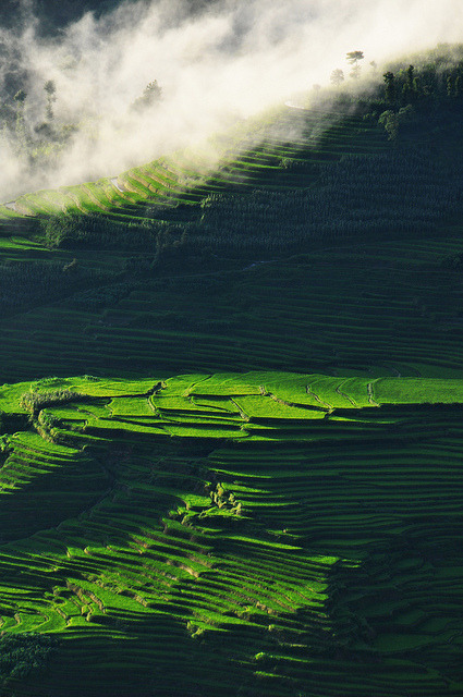 mainroute:  Terrace rice fields Yuanyang by Kat wishes on Flickr.