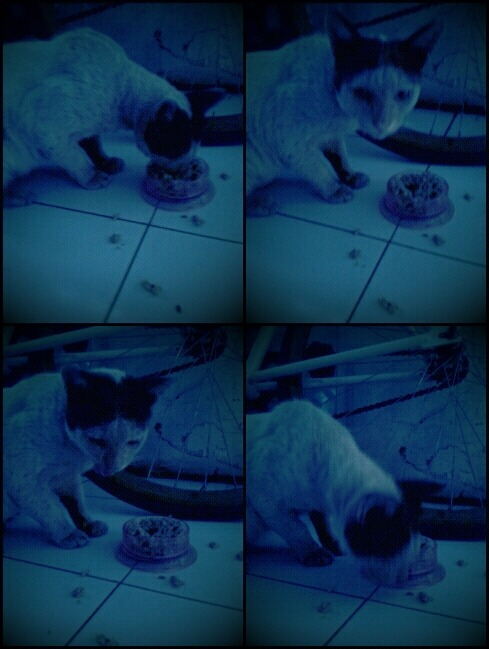 He is Bagong. Just bad name :D #cat #eat