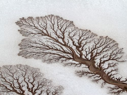 lickystickypickywe:  Rivers forming treelike figures on the desert of Baja California. Photograph by Adriana Franco
