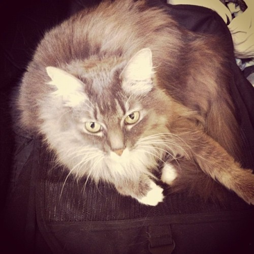 Pixel sitting on José's guitar case.