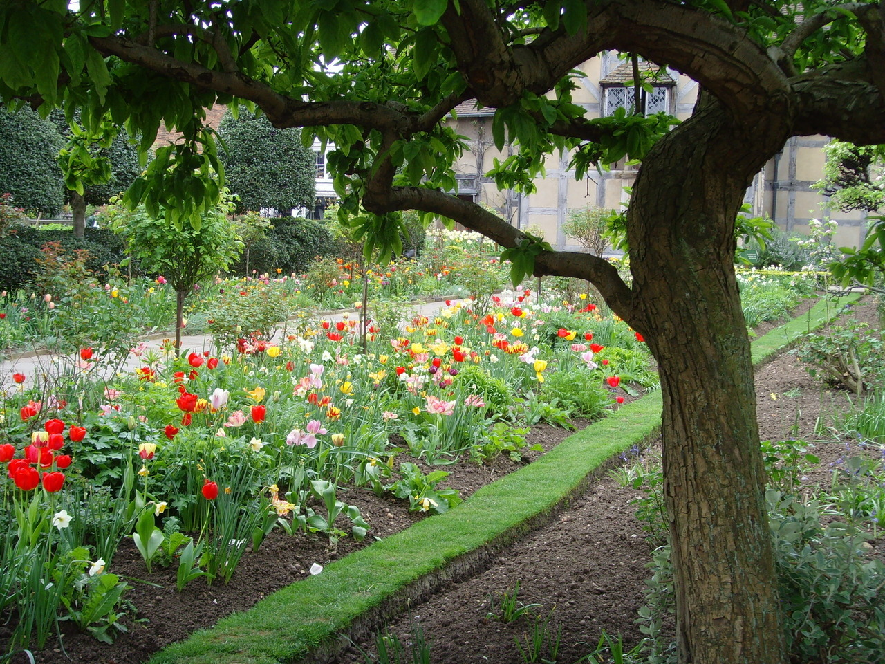 Tulip garden behind Shakespeares Birthplace, Stratford upon Avon, 2009.A lovely tourist destination.From my archive.