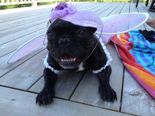 Your Royal Highness, Dutchess! :) By Wendy