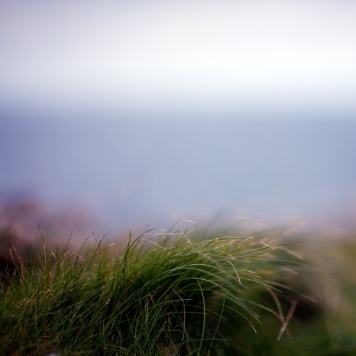 justjulespictures:  grass by the sea