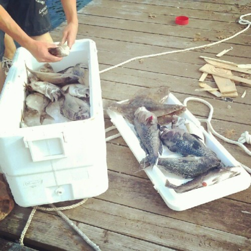 Decent catch #fishing #capecod  (Taken with Instagram)