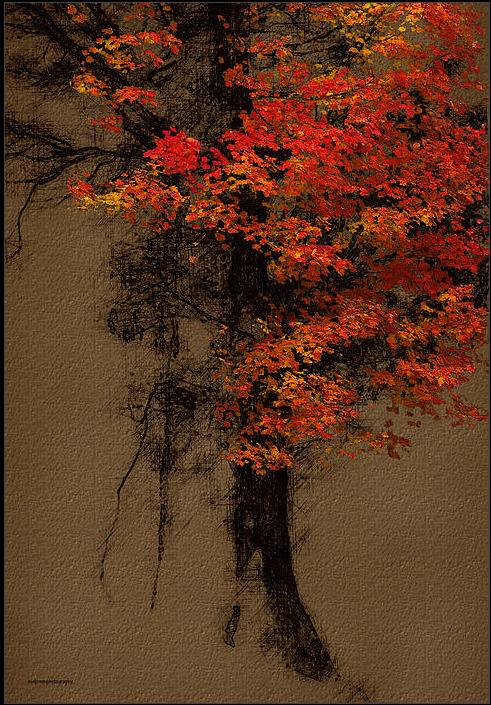 wasbella102:  Autumn Bouquet: Ron Jones With Thanks to maniacallyfascinated for recommending this artist :)