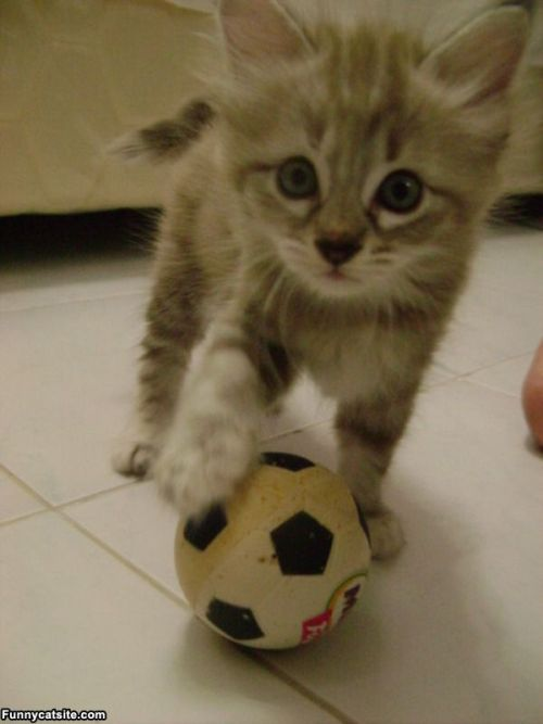 This cat is all set for a game of soccer
