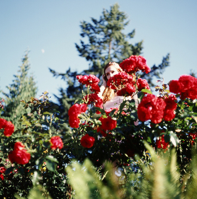 untitled on Flickr.aayla // portland rose test garden