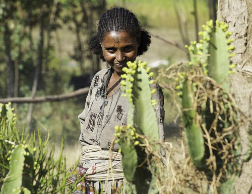 eternalhomeinheaven:  Woman cactus. Ethiopia by courregesg on Flickr.