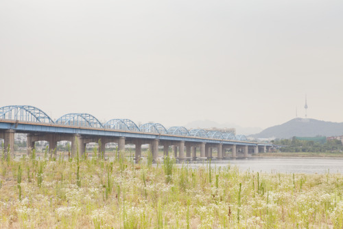 Landscape at Han River Park 한강 공원 풍경