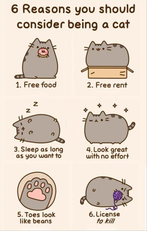 Reasons to be a cat.
