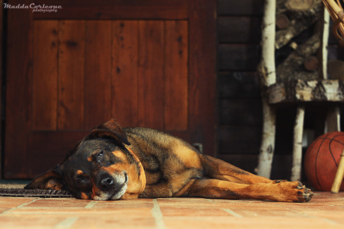 handsomedogs:  Lazy afternoon… I hope you like it :)