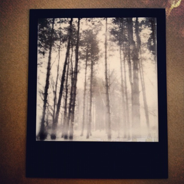 One of my fave Polaroids. #trees #eerie #blackandwhite #grey #polaroid #winter #instantphotography  (Taken with Instagram)