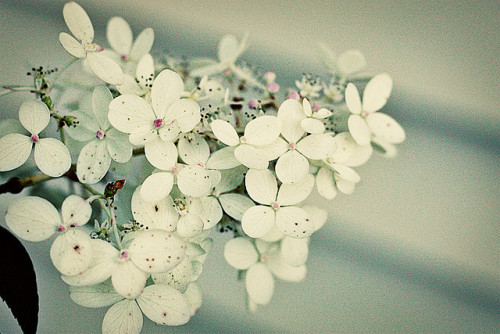 valscrapbook:  091909 by marzipan inc on Flickr.