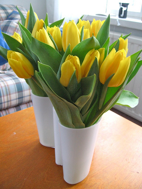 44-365 Yellow tulips by Liiolii on Flickr.