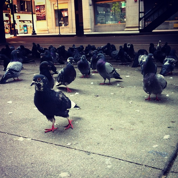 Pigeons DGAF (Taken with Instagram)