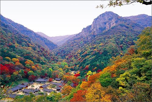 IMAGE - Had you ever expected so much colour in Korea?  (via Pictures)