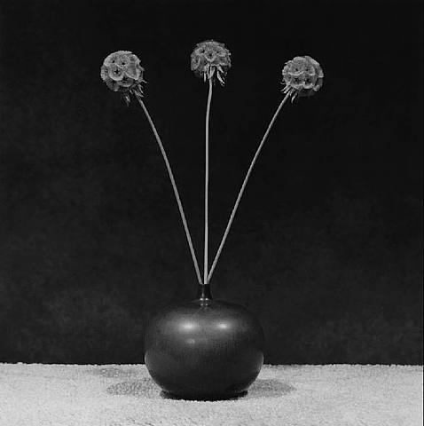 annadoll2001:  Robert Mapplethorpe
