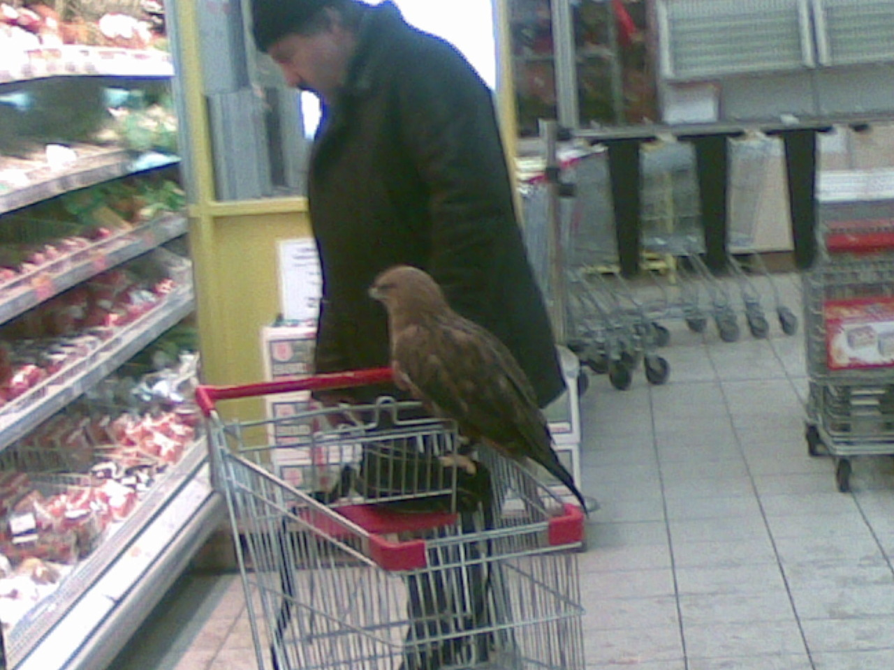 lolzpicx:  just shopping with my eagle