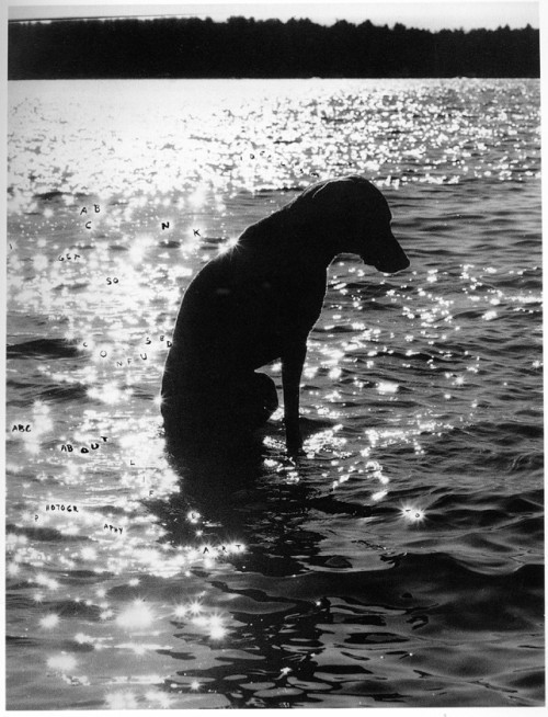 darksilenceinsuburbia:  William Wegman.Contemplating Art, Life and Photography, 1979. Ink on silver gelatin print, 48.3 x 34.9 cm. SW 07018 Private Collection