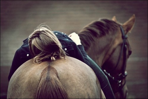 There is no secret so close as that between a rider and his horse. ― Robert Smith Surtees