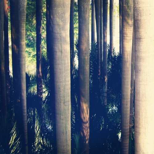 dive into trees. (來自 Instagram)