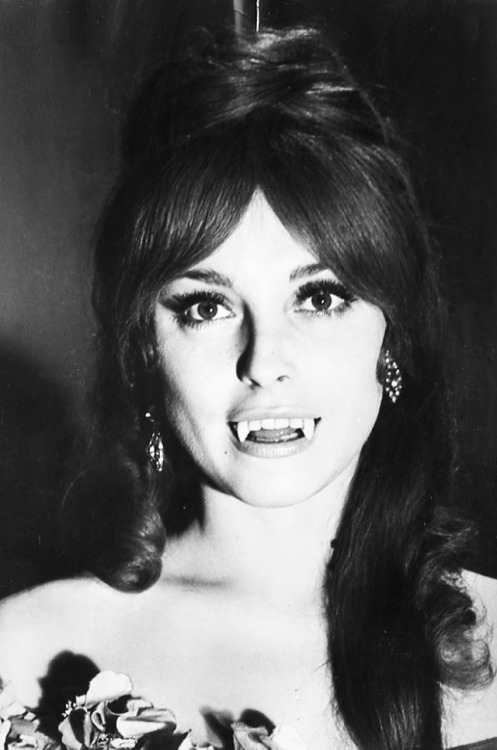 vintagesonia:  Sharon Tate in a promotional photo for The Fearless Vampire Killers (1967)