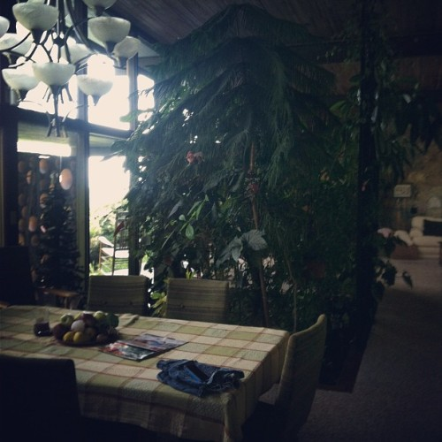 An indoor garden! What?! #tree #inside #interior #garden #green #home #house #interiordesign  (Taken with Instagram)