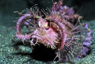 Bizarre Scorpionfish  Jesse Seedath Related articles Arctic Shine Jesse Seedath Related articles Hot and Sexy Girls… (jesseseedathblog.tumblr.com) Among the Most Valuable Jesse Seedath Related articles Hot and… (jesseseedathblog.tumblr.com) Big Bolt Jesse Seedath (jesseseedathblog.tumblr.com)