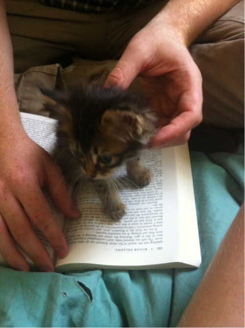 TINY KITTEN READS BOOK