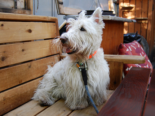 Sherman, East Village superstar and best puppy friend chillin at dba.
