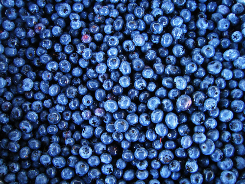 illogicalbrilliance:  wildhotmess:  Blueberries are the only fruit I don't like  I could eat a billion blueberries right now.