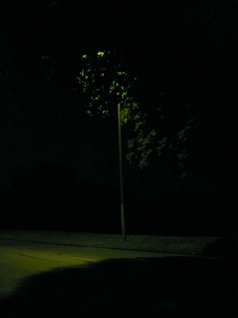 Some beautiful shots I took tonight on my 1am walk~ I call it 'Nightime In Green'